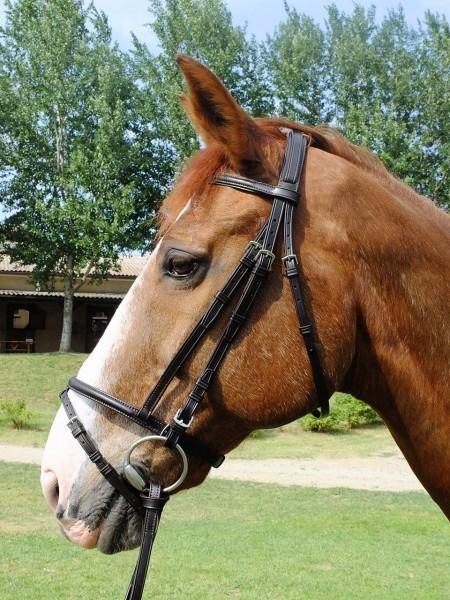 Testiera con sovracapo imbottito capezzino con chiudibocca e frontalino bombati con accenti colorati per cavallo taglia Full.
